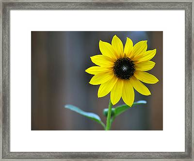 Framed Print featuring the photograph Shine by Amee Cave