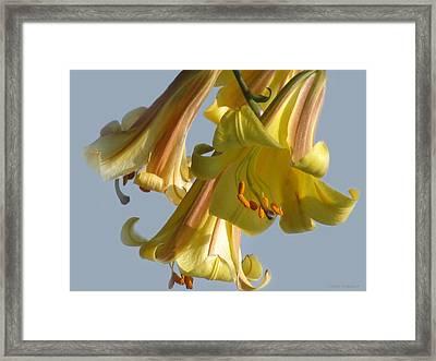 Shine Of The Sky  Framed Print by Debra     Vatalaro