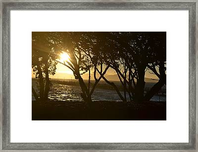 Shine Through  Framed Print by Saifon Anaya