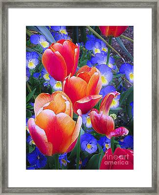 Shining Bright Framed Print