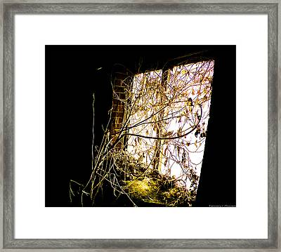 Shining In The Dark Framed Print