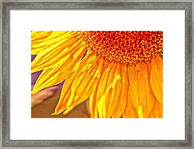 Shining Sunflower Framed Print by Christy Patino