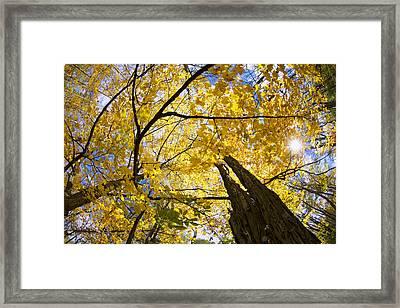 Shining Through Framed Print by Rick Berk