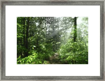 Framed Print featuring the photograph Shining Through by Anthony Rego