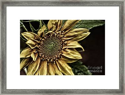 Shinning On You Framed Print by Tamera James