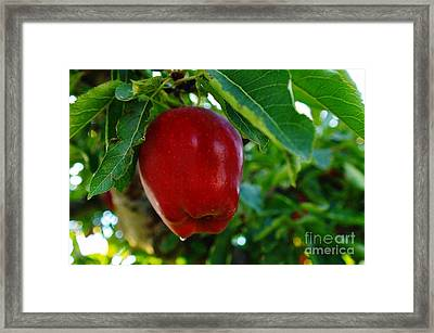 Shiny Red And Ripe  Framed Print by Jeff Swan