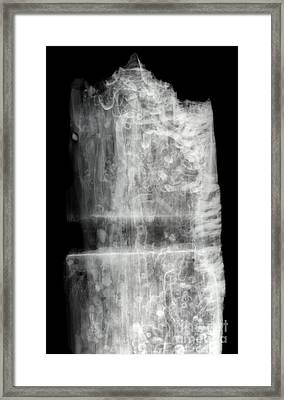 Shipworms Framed Print by Ted Kinsman