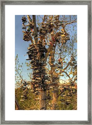 Shoe Tree Framed Print by Lori Kimbel