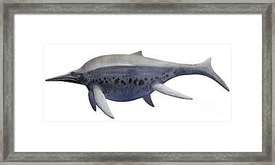 Shonisaurus, A Prehistoric Ichthyosaur Framed Print by Sergey Krasovskiy