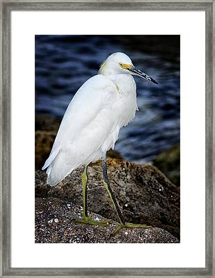 Shore Bird Framed Print by Ercole Gaudioso