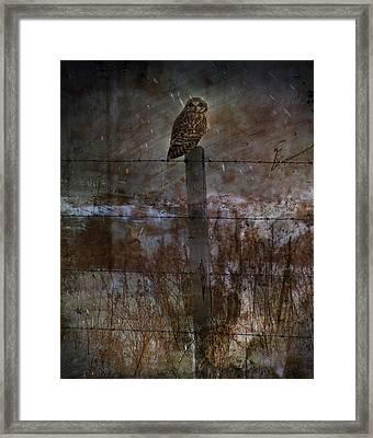 Short Eared Owl Framed Print by Empty Wall