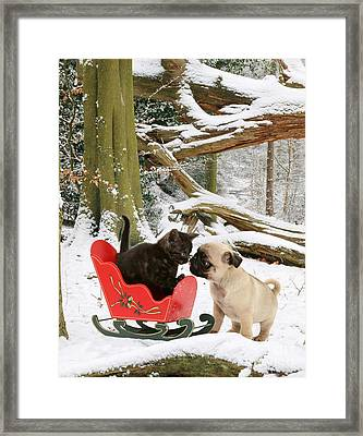Shorthair Kitten And Pug Framed Print by Jane Burton
