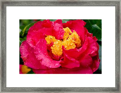 Show Off Framed Print by Rich Franco