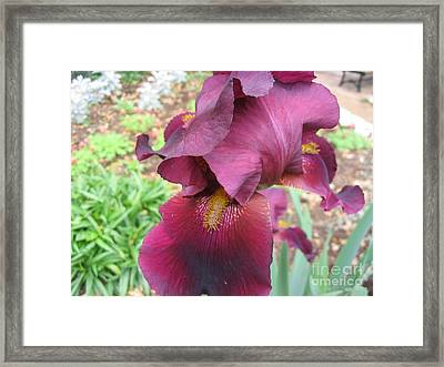 Show Your Tongue Framed Print
