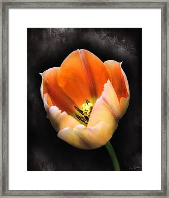Showing Color Framed Print