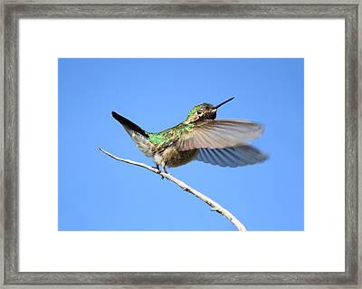 Showing My Beauty Framed Print
