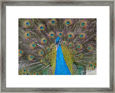 Showing Your True Colors Framed Print by Terri Thompson
