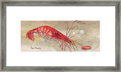 Framed Print featuring the painting Shrimp With Red Shell by Anne Beverley-Stamps