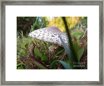 Shroom Among The Grass Framed Print by Linda Seacord