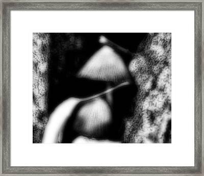 Shroom Magic Framed Print by Mimulux patricia no No