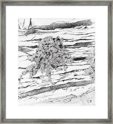 Shrub In Sedimentary Rock Framed Print by Inger Hutton
