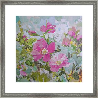 Shrub Roses Framed Print