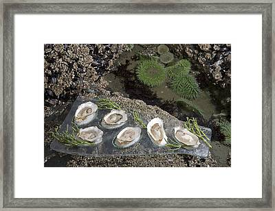 Shucked Oysters Sit On A Platter Next Framed Print by Taylor S. Kennedy