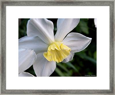 Shy Daffodil Framed Print