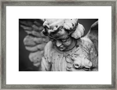 Shy Framed Print by Darren Creighton