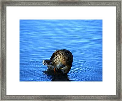 Shy Framed Print by Dave  Kueng
