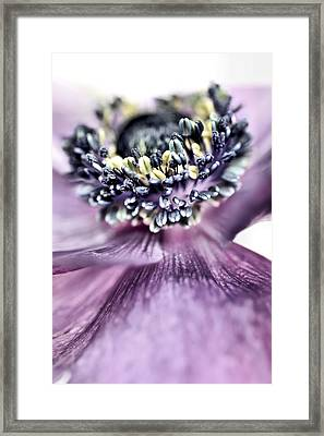 Shy Or Just Acting That Way.... Framed Print by Bob Daalder