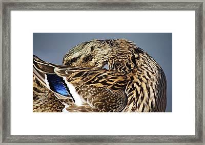 Shy Framed Print by Paulette Thomas