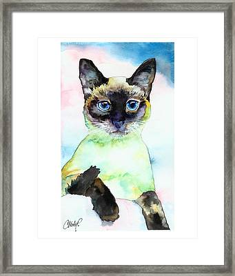 Siamese Cat Posing Framed Print