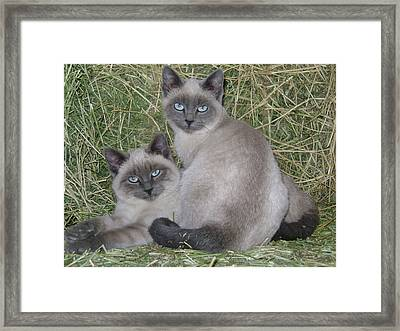 Framed Print featuring the photograph Siamese Haystack by Charles and Melisa Morrison