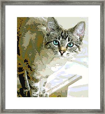 Siamese Mix Kitten Framed Print by Dorothy Walker