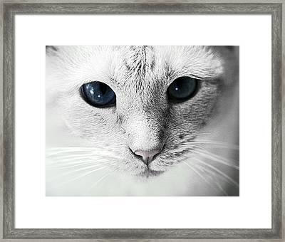 Siamese Stare Framed Print by Wendy White