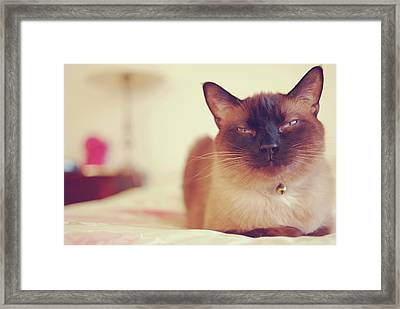Siamese Framed Print by Trista Watson Photography