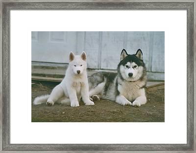 Siberians Framed Print