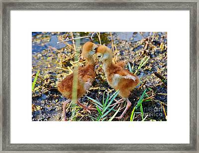 Sibling Rivalry 2 Framed Print
