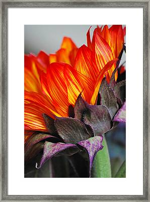 Side Of Beauty Framed Print