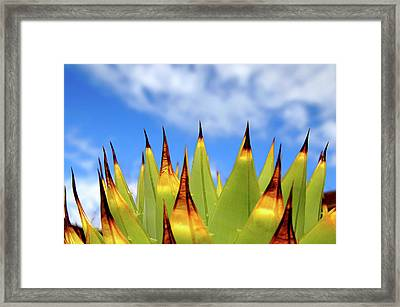 Side View Of Cactus On Blue Sky Framed Print by Greg Adams Photography