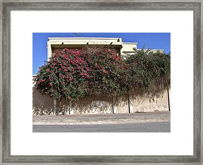 Sidewalk Florae In Doha Framed Print by David Ritsema