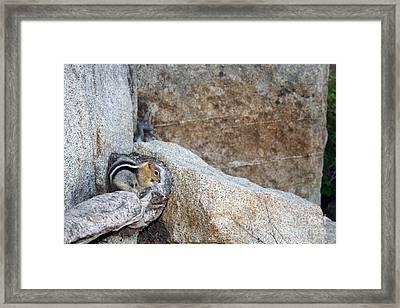 Sierra Nevada Chipmunk Framed Print by Juan Romagosa