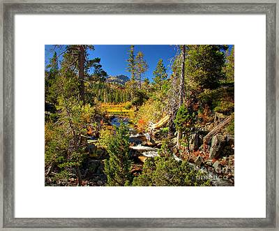 Sierra Nevada Fall Beauty At Lily Lake Framed Print