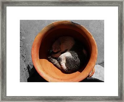 Siesta 2 Framed Print by Xueling Zou