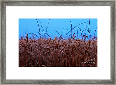 Sign Of The Times Framed Print by Lisa Holmgreen