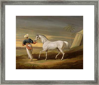 Signal - A Grey Arab With A Groom In The Desert Framed Print by David of York Dalby