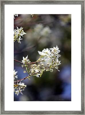 Signs Of Spring Framed Print by Deborah Hughes