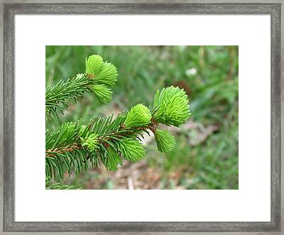 Signs Of Spring Framed Print by Rebecca Overton