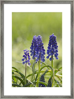 Signs Of Spring Framed Print by Straublund Photography
